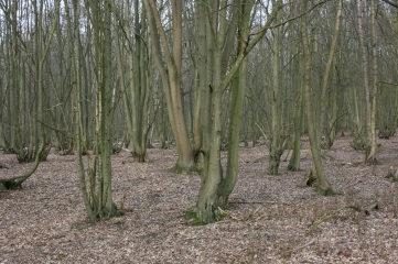 17_3 TL4902 Ongar Park Wood coppice