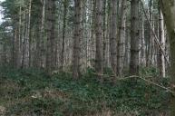 17_3 TQ5399 replanted Aspen Wood