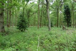 15_6 Bernwood cmpt 20b 86