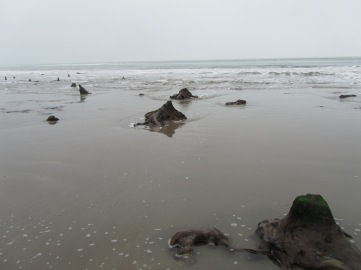 SN6091 14_3 Borth beach submerged forest mid section stumps in surf 4