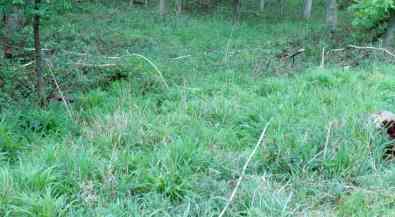 wytham plot 91 grassy
