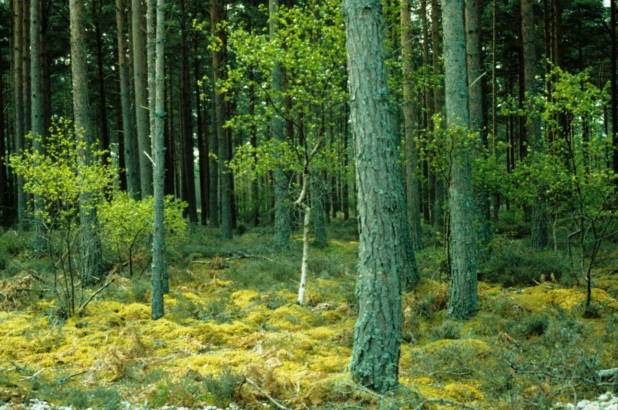 Where to with coniferplantations?