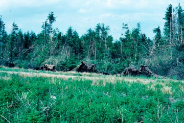 8. Windblow Forest of Ae