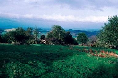 SJ3700 92_11 holly pasture 2