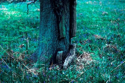 SO6008 82_5 ivy cut on oak