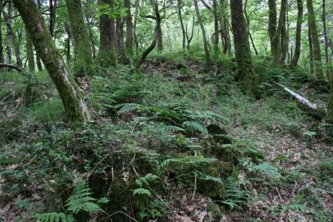 17_6 SD3382 Roudsea Wood acid rocks