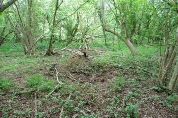 15_5 plot 475076 flalen birch