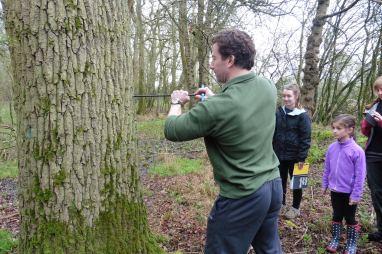 16_4 tree coring Marleywood plantation 1