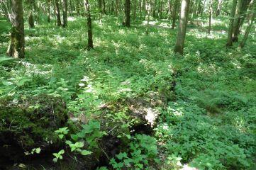 Vegetated log 2 july 18