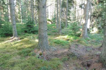18_8 NY69 Kielder bilberry moss 2