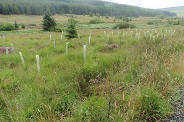 18_8 NY69 Kielder broadleaved edge planting