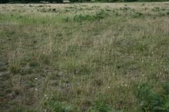 17_8 TL8189 Grimes Graves grass heath 9