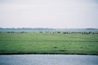 horse herds 2