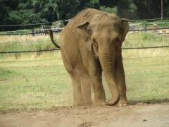 SP9634 13_7 elephant 2