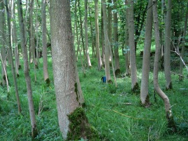 Ash grove plot 3