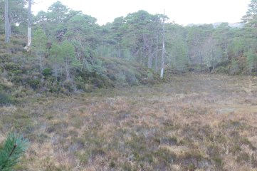 18_12 NH1923 Glen Affric peat hollow PB 6