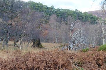 18_12 NH2326 Glen Affric birch and pine
