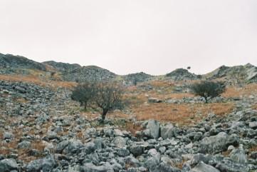 hawthorn savanna nwales