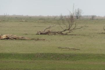 19_3 OVP dead trees 1