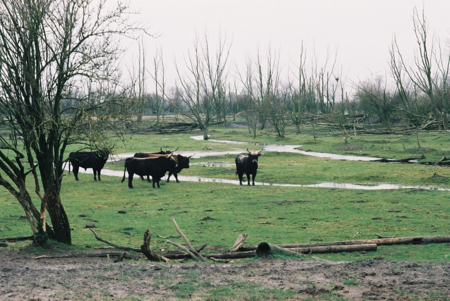 Oostvaardersplassen revisited