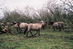 horses 7