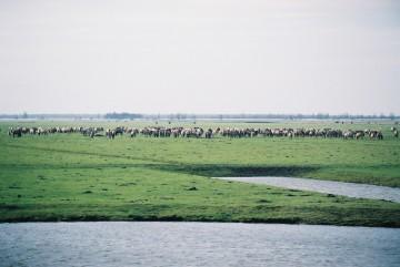 horses en masse