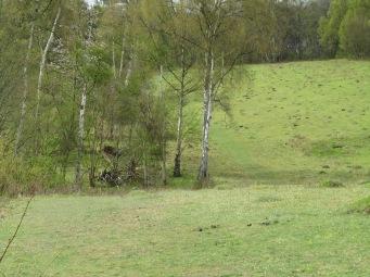 12_4 SU716882 grassland area