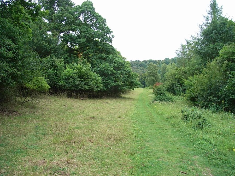 Time and relative dimensions in space in woodlandsurveys