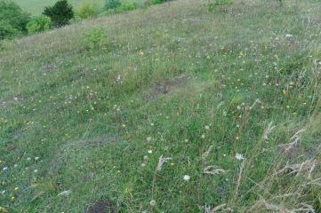 SU7296 15_7 Aston Rowant chalk grassland short