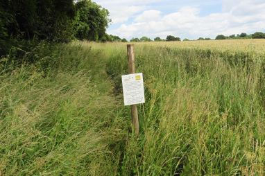 13.7 The wide field margin created as part of an agri-environment scheme will provide a buffer against further spray and fertilizer spread into the hedge.