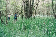alder swamp low park jun 03