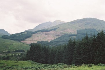 trossachs conifer jun 03