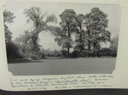 BAP 1174 elms Stanton Harcourt area 1957_5