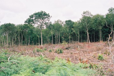 Serious coppice restoration would mean much woodland would be looking like this