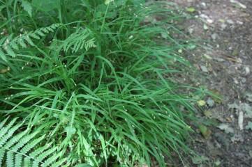 17_6 SD3382 Roudsea Wood melick 1 (2)